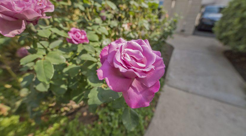 14 - Rose Garden